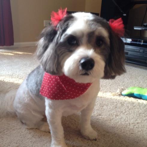 SewMod doggie treats