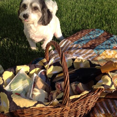 SewMod picnic